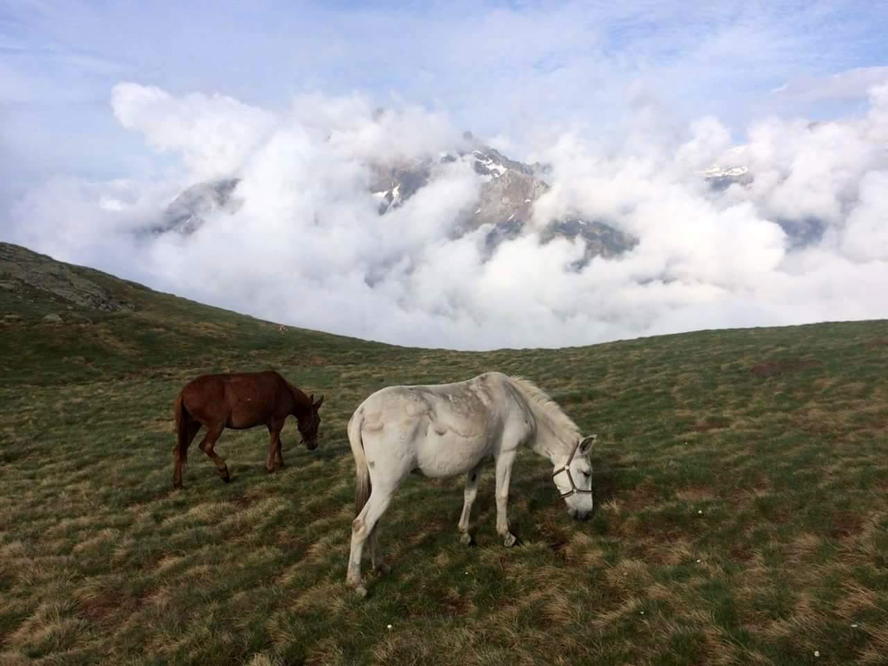 IMG 20160613 WA0003 - Porteo de avituallamientos, Trekking Mule.