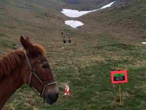 IMG 20160613 WA0004 300x225 - Porteo de avituallamientos, Trekking Mule.